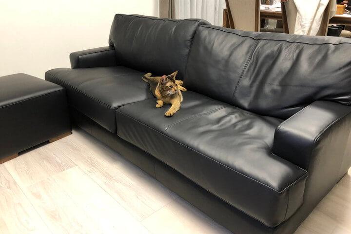 愛猫と一緒にほっこりしたい/KOKOROISHIソファのお客様の声