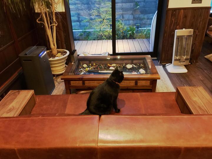 猫がくつろげる革ソファ、BASE(ベイス)